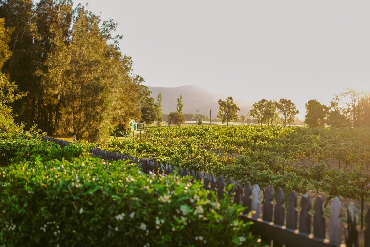 Hunter Valley Accommodation - Casuarina Estate - La Petite Maison - all