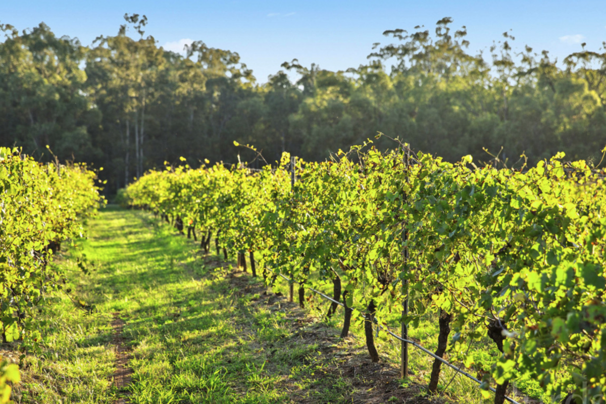 Hunter Valley Accommodation - Banksia Suite at The Grange - Rothbury - Vineyard Views