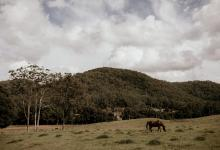 Hunter Valley Accommodation - Ravensdale Retreat - Yarramalong Valley - all